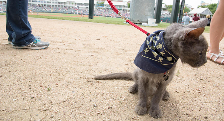 Elderly Cat Attends First Baseball Game
