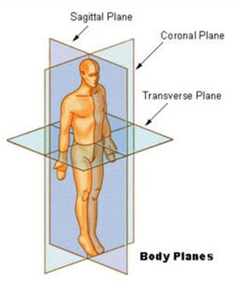 The body's three planes of movement. A cricket bowler is a very good example